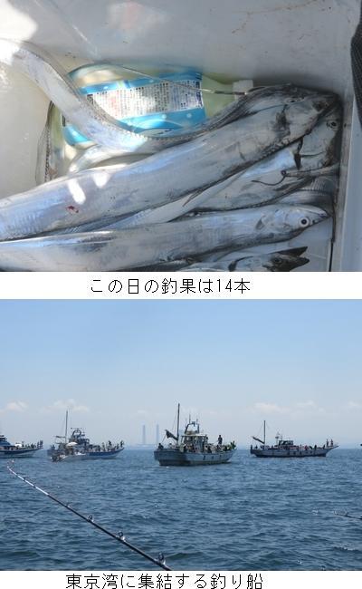 タチウオ2.JPG