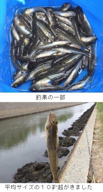 8月28日の釣果.jpg
