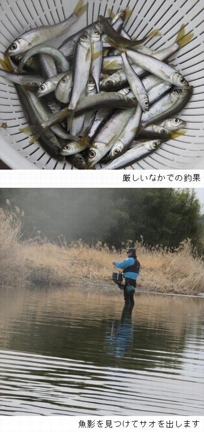 私の釣果.jpg