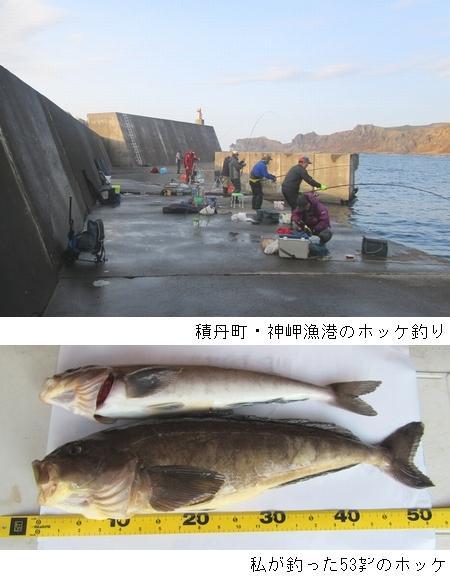 ホッケ釣り場1.JPG