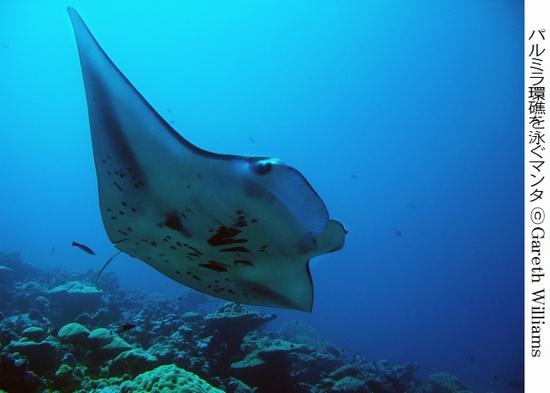 パルミラ環礁.jpg