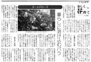 ガーデン/バラ180.jpg