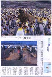 七つの海南極・アザラシ.jpg
