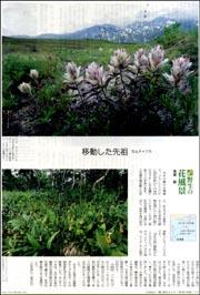 世界野生の花カムチャッカ.jpg