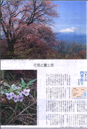 花見と富士見 陣馬山.jpg