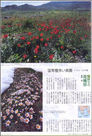 花風景・クレタ島.jpg