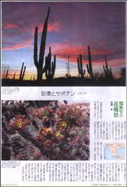 野生の花風景サボテンメキシコ.jpg