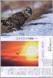 野鳥・コミミズク.jpg