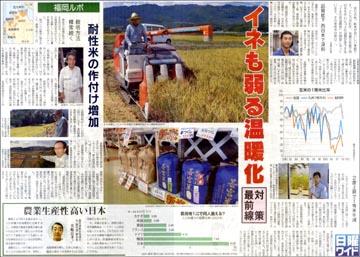 121014ワイド耐性稲.jpg