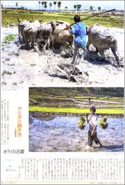 14070634water buffalo180.jpg