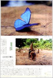 15112934butterfly180.jpg