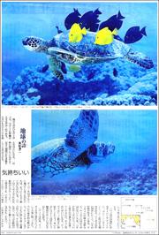 16022134sea turtle180.jpg
