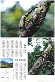 16022834stag beetle180.jpg