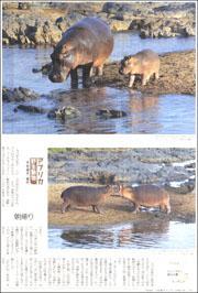 16102334hippopotamus180.jpg