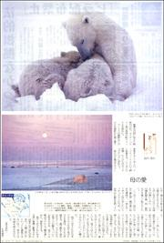 18051334polar bear180.jpg