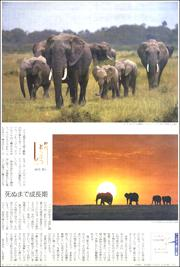 18120234elephant180.jpg