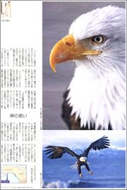 19020334golden eagle180.jpg