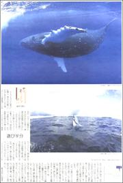 19050542whale180.jpg