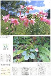 19061634Himesayuri180.jpg