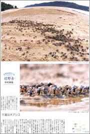 19120134Henoko180.jpg