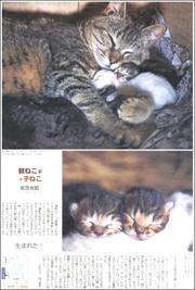 20011934Tugaru180.jpg