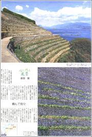 20030834Imabari180.jpg