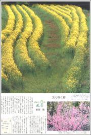 20040534Asuka180.jpg