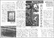 20060710cucumber180.jpg
