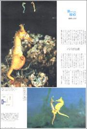 20061434Minamata180.jpg