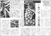 20080208Brusselssprouts180.jpg