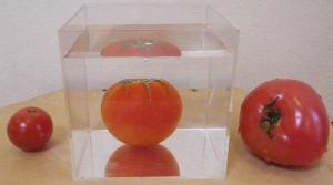 沈んだトマト